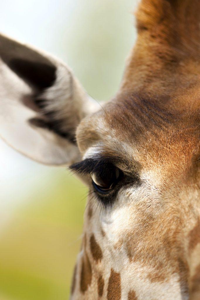 Leadership and Giraffe Marketing