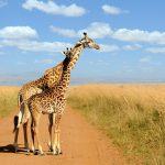 Giraffe Marketing Edwin Gerace
