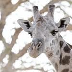 Giraffe Marketing