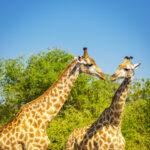 Social Media with Giraffe Marketing