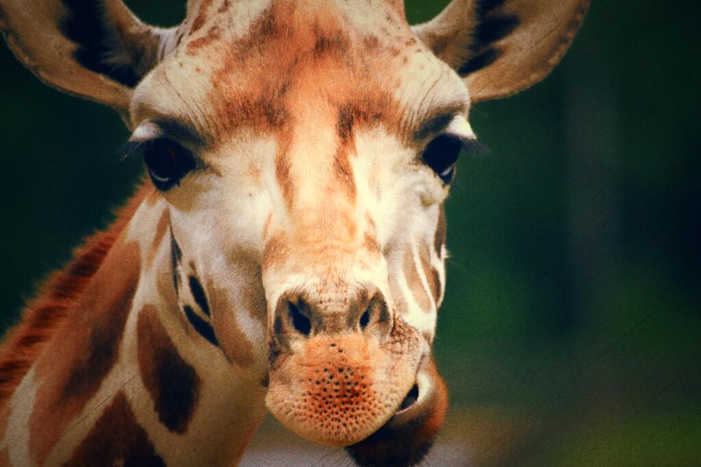 Giraffe Marketing LLC - Digital Marketing with Edwin Gerace
